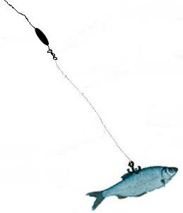 Ловля судака на живца с лодки