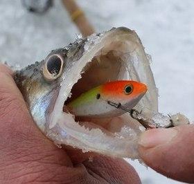 Ловля судака зимой на бокоплава