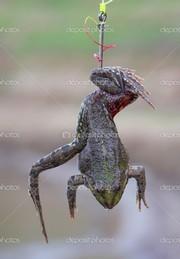 Цепляем лягушку на крючок
