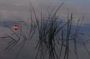Как ловить на заякоренные кружки